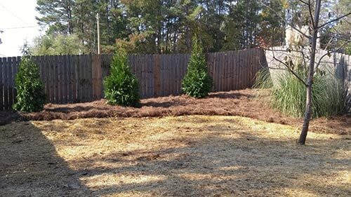 the yard after